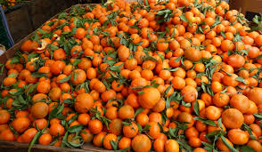 Banned Import of Twenty Tons of Tangerines in Bosnia due to Increased Content of Pesticides