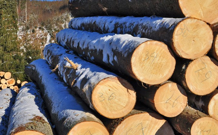 Wood Industry in BiH permanently recording an Increase in Export - Sarajevo  Times