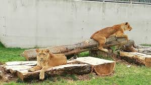 Domestic Company 'Klas' donated 1.5 Tonne of Food for Animals in Sarajevo Zoo